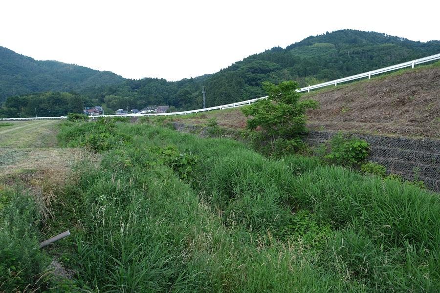 メダカ米の産地は源氏蛍の里の風景写真