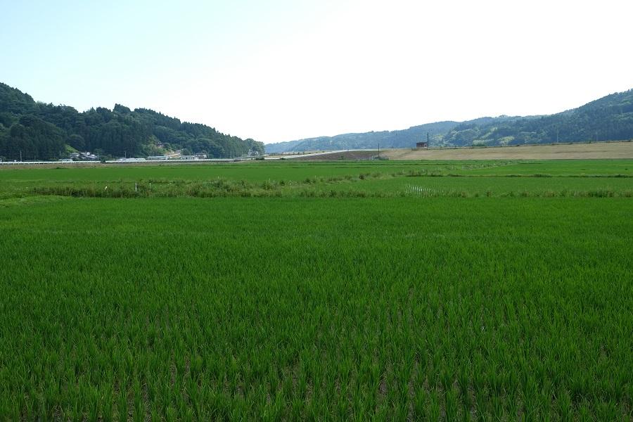 メダカ米の産地の田んぼの風景写真