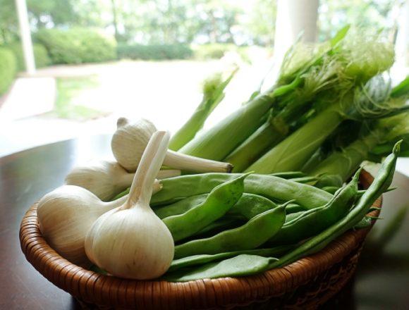 テラスロンド本寺の野菜たち