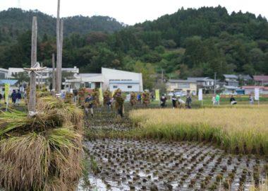 めだか米の収穫祭の様子